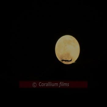 Luna Llena 2014