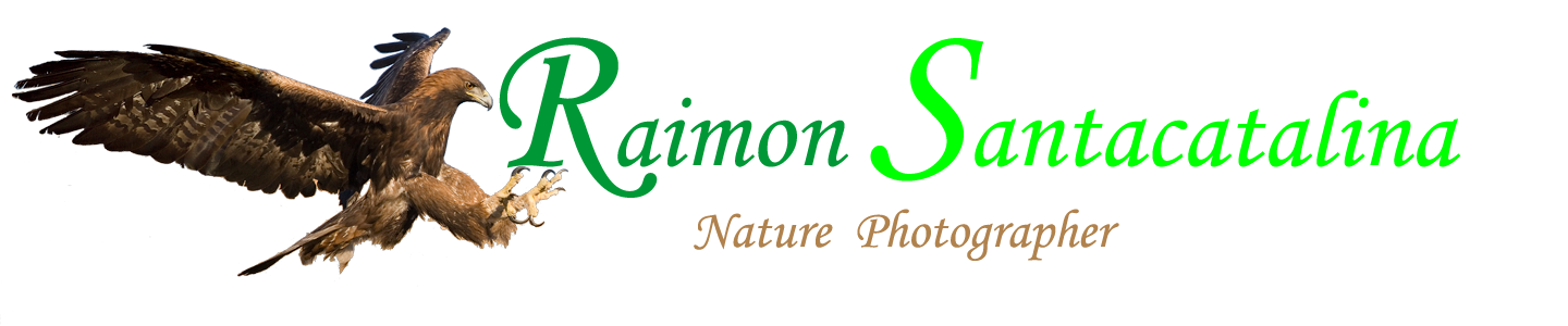 Raimon Santacatalina | Nature Photographer   -